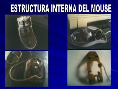 ESTRUCTURA+INTERNA+DEL+MOUSE+1.bmp