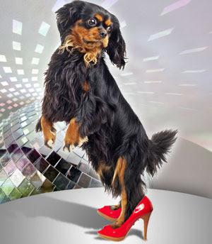 http://1.bp.blogspot.com/_gvEaX9SNkuQ/R4Y19eu3oyI/AAAAAAAACoQ/TLQzocu2tUs/s400/dancing_dog.jpg