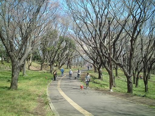 Negishi park. This is the road we ran on