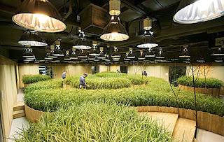 underground farm in Tokyo