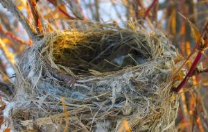 Empty Nest Picture from MorgueFile