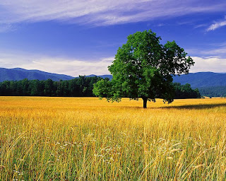 صور طبيعية 2012