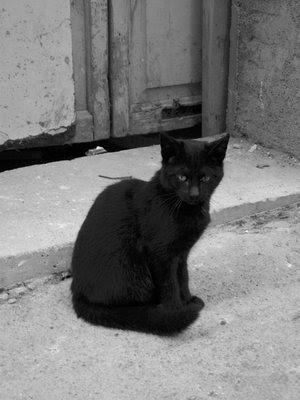 Gothic Tea Society Black Cats
