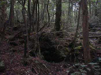 Gothic Tea Society: Aokigahara- The Suicide Forest
