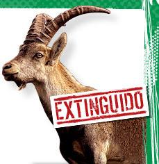 Animales Extintos Bucardo+pirineos