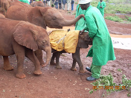 Elephant Orphanage #1