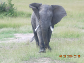 Mara Lost Elephant