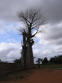 Kambu Chyulu