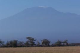 Amboseli View