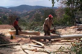 African Sawmill 1