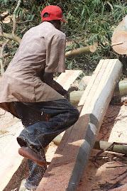 African Sawmill