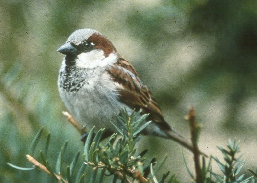 had formed a Sparrow Club