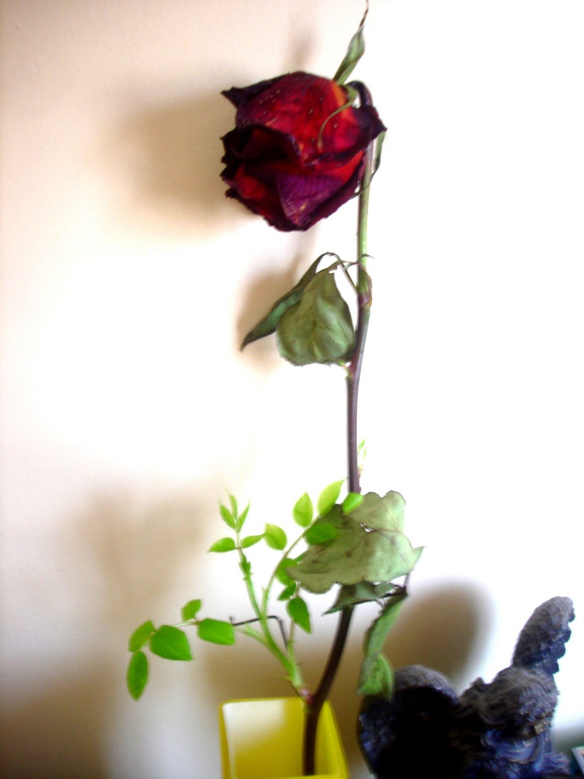 [rosa.JPG]