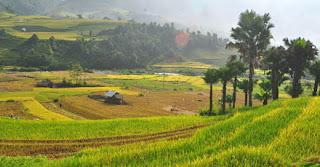 Sapa terrace field, Vietnam