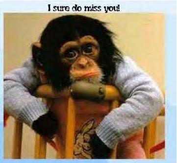 http://1.bp.blogspot.com/_h21BxFaWQJo/RlqjT5IRxNI/AAAAAAAAAQc/RN8seSO7cwM/s400/monkey..i+sure+do+miss+u.bmp