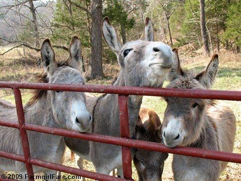 animals mating horse mating donkey mating funny horse compilation 2015 ...