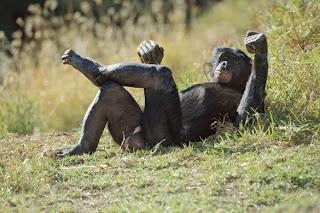 primate who has oral sex
