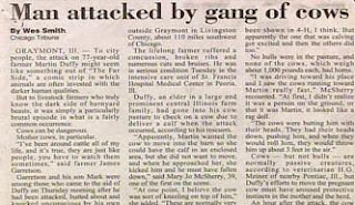 womples stupid news funny headline about man being attacked by a gang of cows not herd