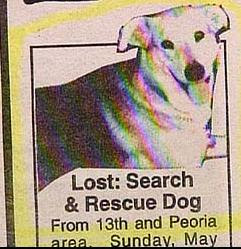 funny lost and found ad for search and rescue dog