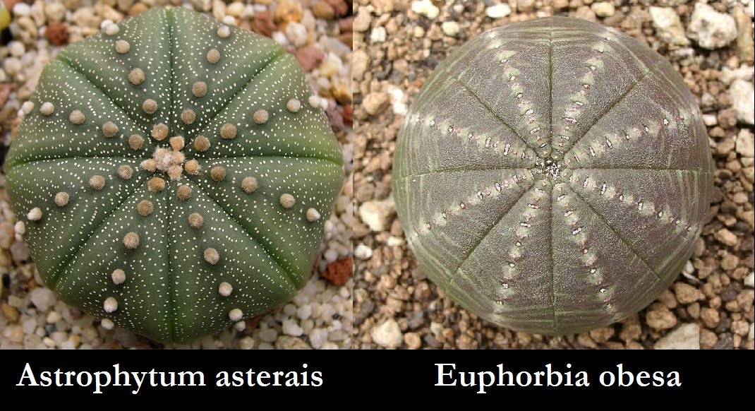 The Underrated Pure Awesomeness Of Plants Convergent Evolution
