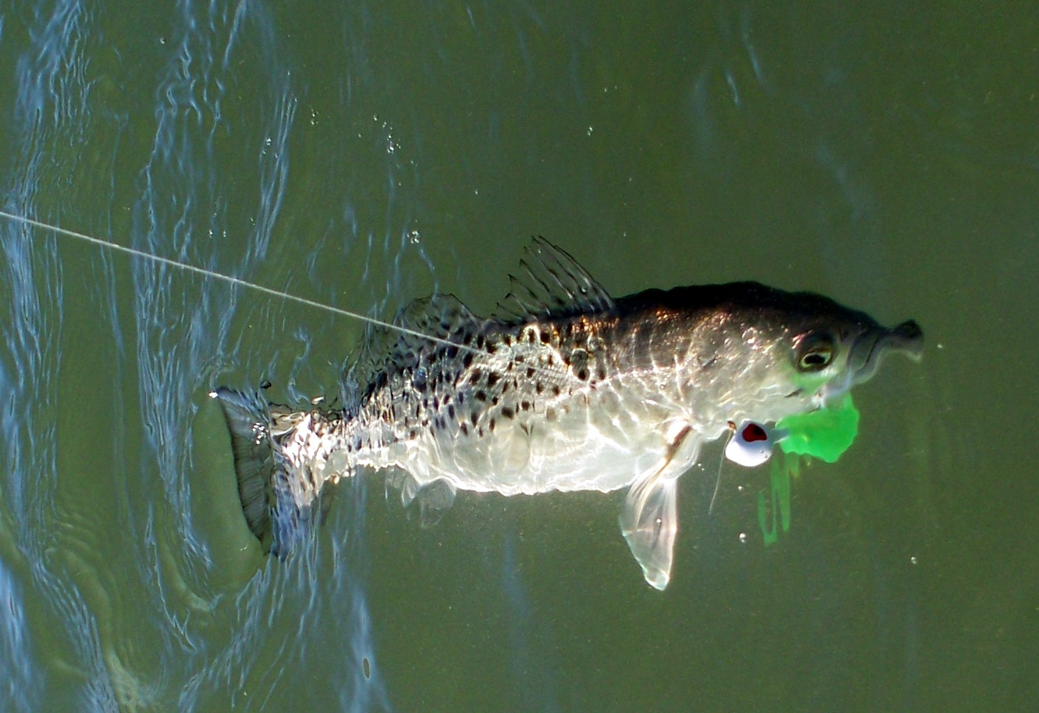 Top Water Charters Fishing Reports and News Beaufort ...