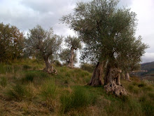 Venerable olive tree sculptures