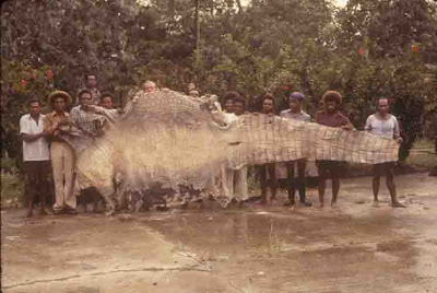 Worlds Biggest Crocodiles Here Be Dragons - Meet worlds largest crocodile caught philippines