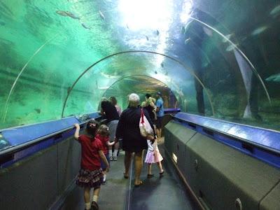 Activity report oceanworld manly for Shark tank fairy door