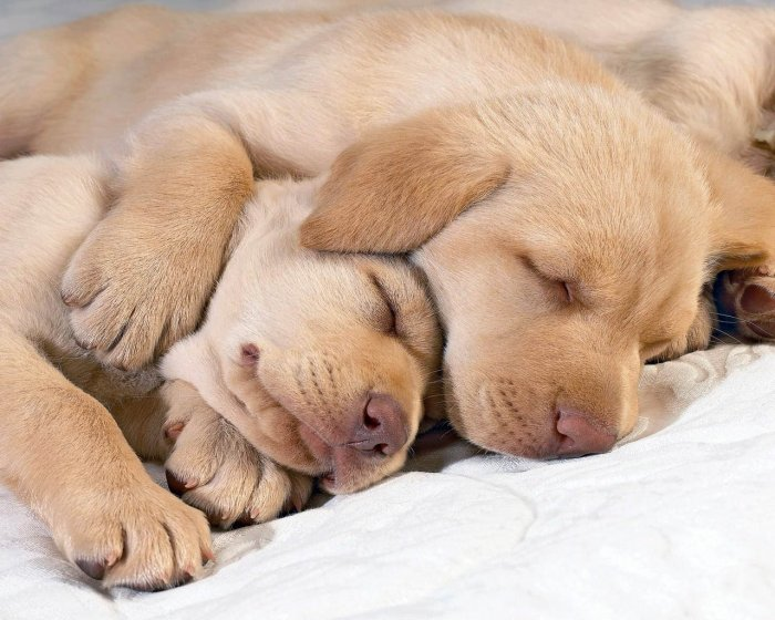 THE WORLD OF PICTURES: SWEET SWEET PUPPY...