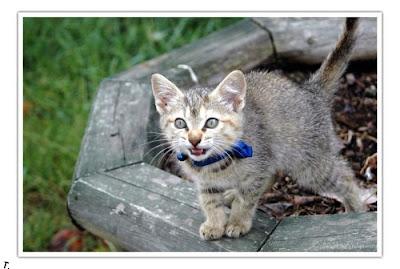 cutest kitten