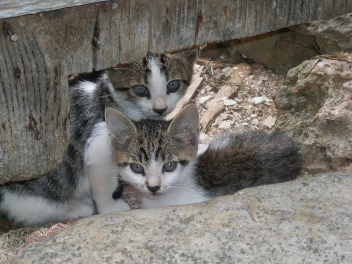 τα δυο γατακια στο σπιτι μας [ Μαχαιρα Ακαρνανιας ]