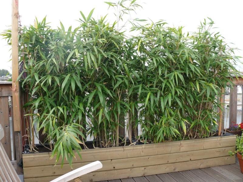 Beplanting - Bamboe in bakken terras ...