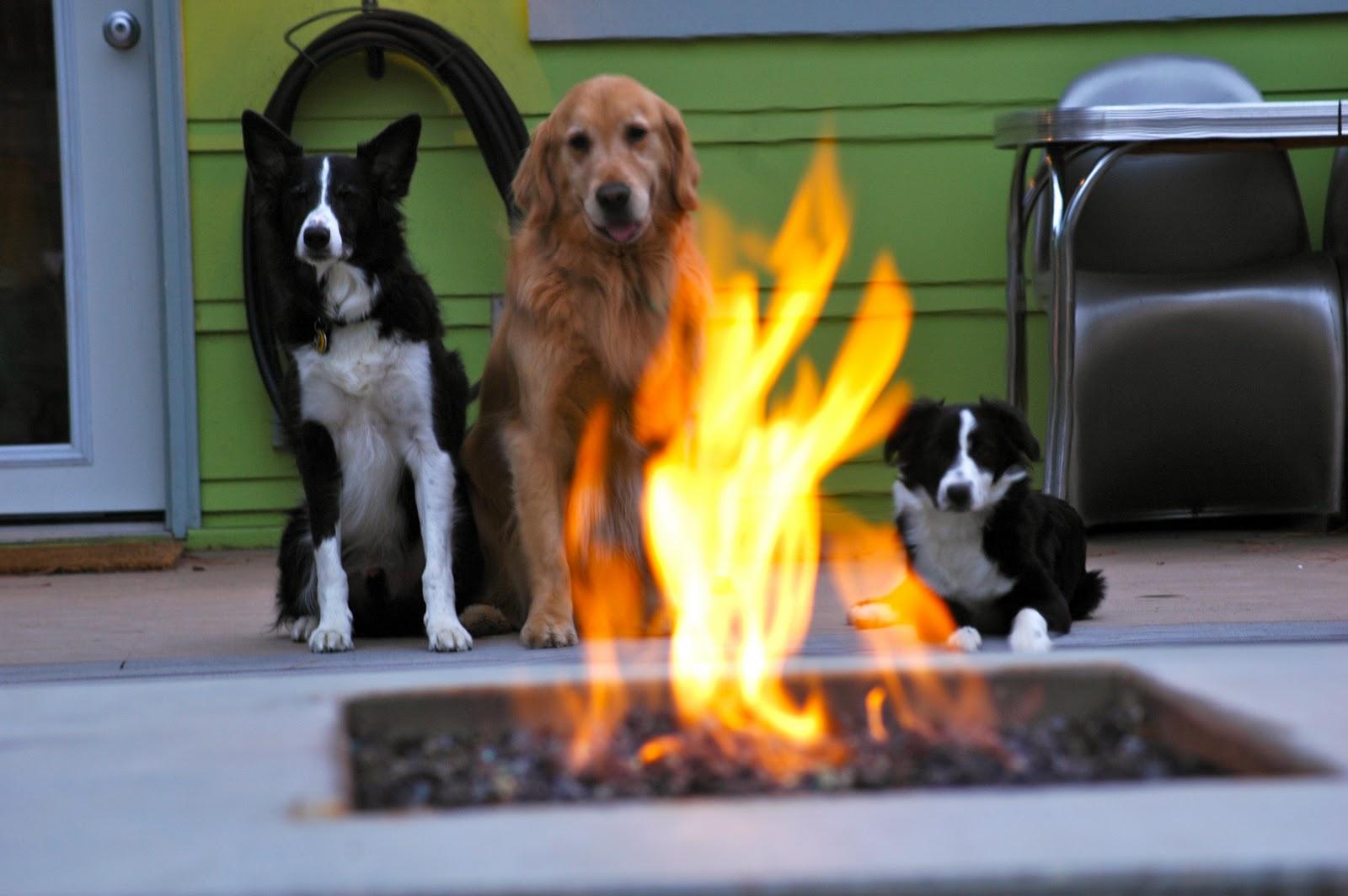 vaktar elden