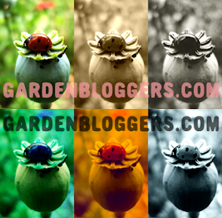 Garden blogger photography garden bloggers film photo effects with virtual photographer plug in