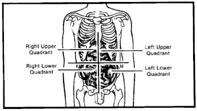 4 Quadrants of the Abdomen http://learn-free-medical-transcription.blogspot.com/2008/12/lesson-6-abdominal-quadrants.html