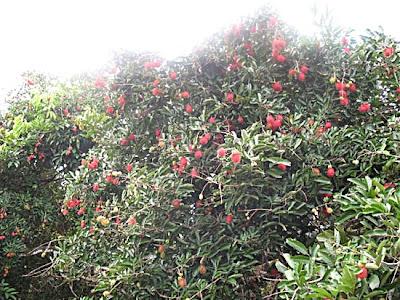 Sa Det Yad Orchard