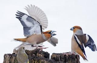 Et les oiseaux chantaient