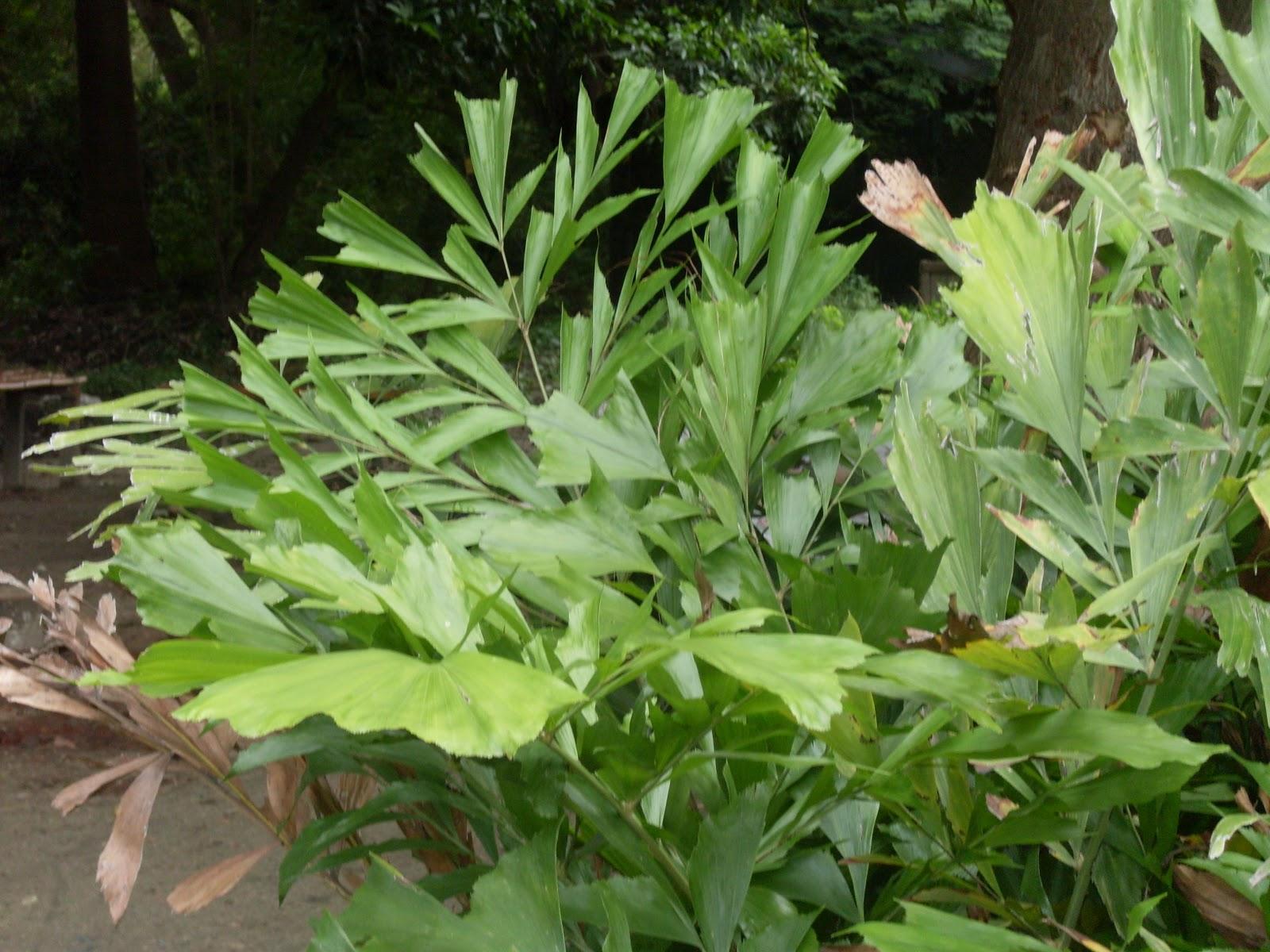 Plantas ornamentales for Plantas ornamentales wikipedia