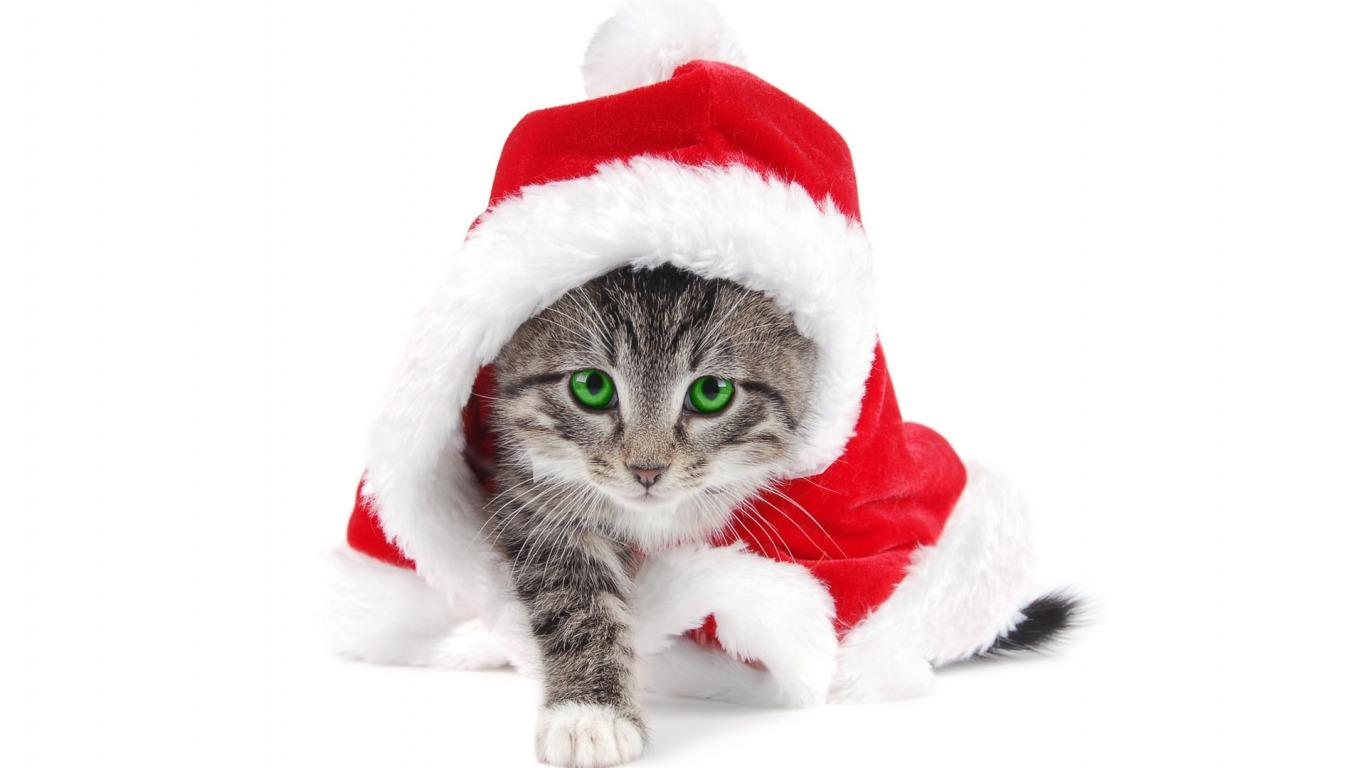 http://1.bp.blogspot.com/_hN-RNLUCt5Q/TQzVbNS0trI/AAAAAAAACLY/Z3mBYNx2GB0/s1600/Christmas+wallpaper+4.jpg