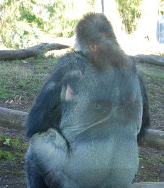 Gorilla Food Recipes