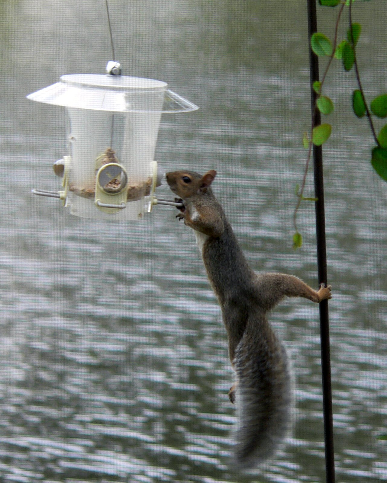 how to stop squirrels from getting to bird feeders