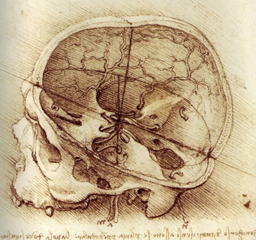 Historia del Cerebro o El Nacimiento de la Neurociencia   Psicología ...