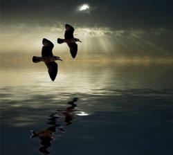 A paz deve ser buscada e sentida por todos.