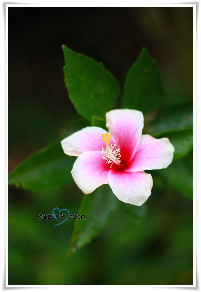 flora dan fauna~