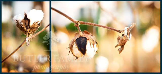 Vertical and horizontal shot of engagement ring on cotton plant
