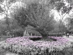 Suzhou Garden- Suzhou