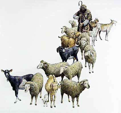 the trajectory of sheep and