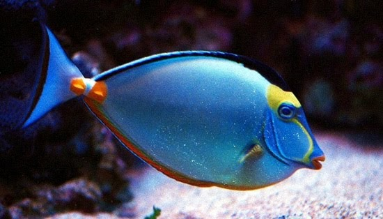 Comida para animales peces for Comida viva para peces