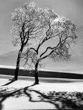 Tree Click