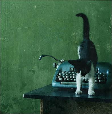 Chat écrivain